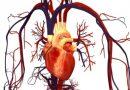 Vitamin C je vynikající pro srdce, zejména po operaci