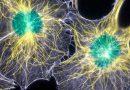 Vědci objevili v mozku biofotony: je naše vědomí přímo spojeno se světlem?