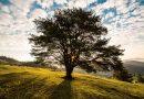 Zahraj si na strom: uzemňovací cvičení pro děti