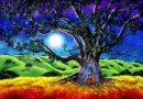 Stromy jsou zdrojem života, energie i lásky: jak se spřátelit se stromem (1/2)