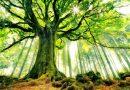 Další nový poznatek o stromech: mají tep jako my, jen mnohem pomalejší