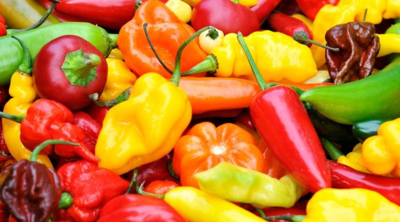 Bounty-super-hot-peppers-pepper-joes