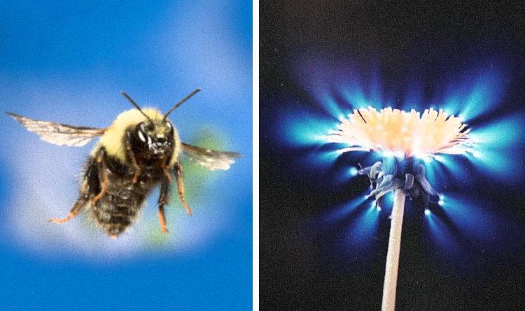 Bioenergie a čchi: včely na dálku cítí energetická pole květin a komunikují s nimi
