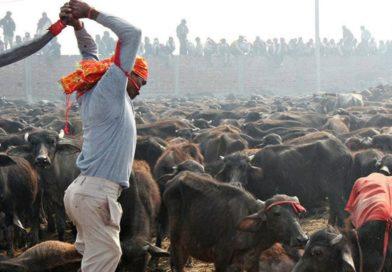 Třetí dimenze ohně a krvavých obětí: jak si svým chováním ke zvířatům kumulujeme karmický dluh
