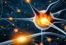 Jak podpořit tvorbu nových neuronů v mozku