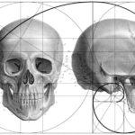 Zlatý řez ve struktuře lidské lebky jako informační rozhraní mezi světy