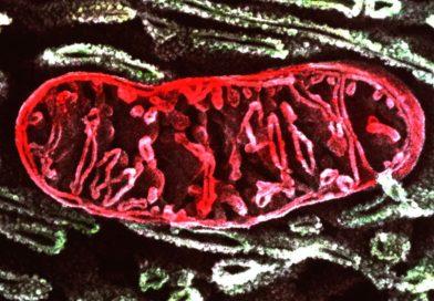 Co bychom měli vědět o mitochondriích 1.