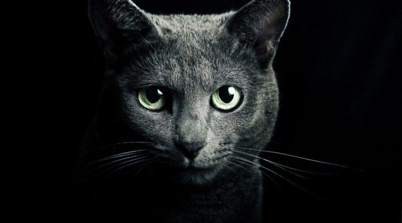 Kočičí aura obsáhne celý domov a vypudí z něj zlé energie