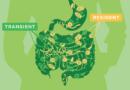 Transientní probiotika: detoxikují střeva a odejdou