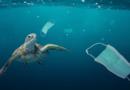 Jednorázové roušky se rozloží za 450 let… a v oceánech jich teď plave přes 1,5 miliardy