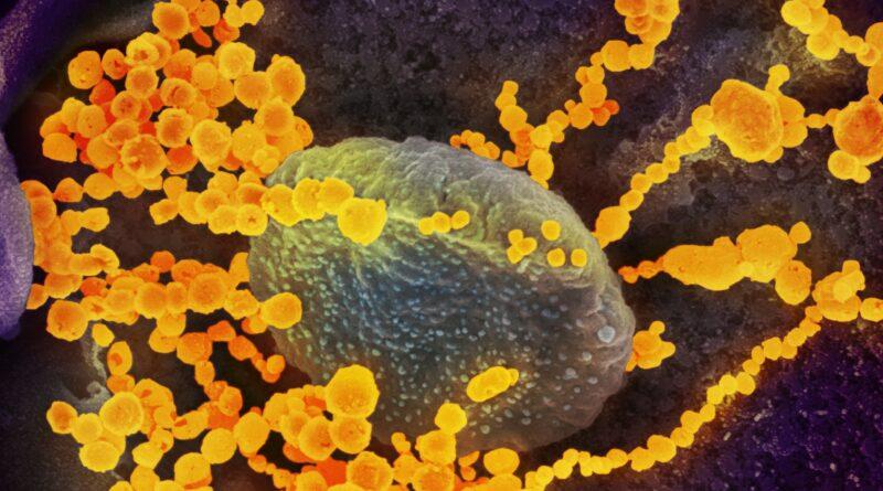 Tři vrstvy lidské imunity – protilátky jsou až ta poslední