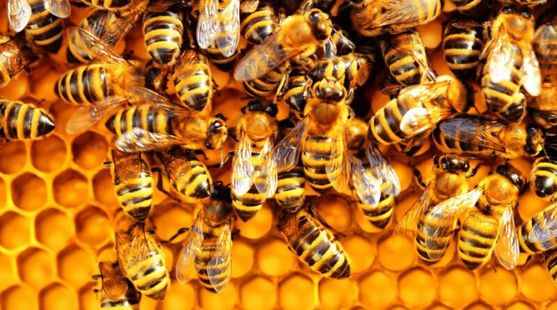 Co nám vzkazují včely o karmě a vzestupu