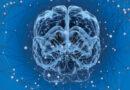 """PQQ: """"tajná přísada"""", díky níž mozek mládne a tělo má více energie"""