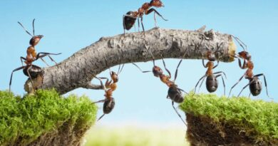 Co nám vzkazují mravenci o rovnováze, spolupráci a uzemnění